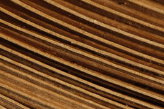 Ritmo di legno Fotografia Stock