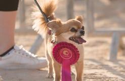 Ritratti del cane fotografie stock libere da diritti