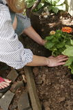 Ritratti del giardino Fotografia Stock Libera da Diritti