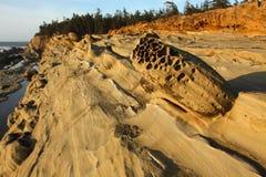 Ritratti del litorale dell'Oregon Fotografia Stock Libera da Diritti