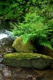 Ritratti dell'Oregon Fotografie Stock