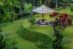 Ritratti freschi e bei del giardino immagine stock