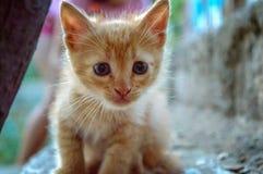Ritratto adorabile del gatto Fotografia Stock Libera da Diritti