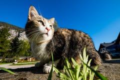 Ritratto all'aperto del gatto Fotografia Stock