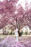 Ritratto all'aperto di giovane bella signora sorridente felice che posa vicino all'albero di fioritura Accessori alla moda d'uso  immagini stock