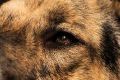 Ritratto alto vicino di un cane ibrido del cane nell'interno su luce solare fotografia stock
