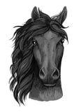 Ritratto artistico nero del fronte pieno del cavallo del corvo Immagini Stock Libere da Diritti