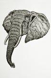 Ritratto capo dell'elefante royalty illustrazione gratis