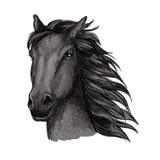 Ritratto corrente fiero nero del cavallo Fotografie Stock Libere da Diritti