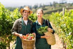 Ritratto dei canestri felici della tenuta delle coppie dell'agricoltore delle verdure Fotografia Stock