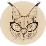 Ritratto dei pantaloni a vita bassa del gatto selvatico con i vetri Fotografie Stock