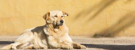 Ritratto del cane immagine stock libera da diritti