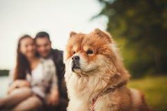 Ritratto del cane del cibo di cibo all'aperto Fotografie Stock Libere da Diritti
