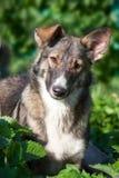 Ritratto del cane di estate immagine stock libera da diritti