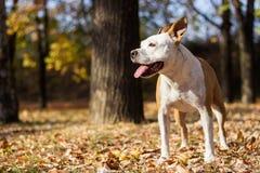 Ritratto del cane di felicità, fondo della sfuocatura immagini stock libere da diritti