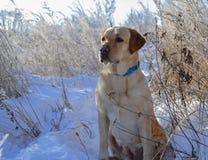 Ritratto del cane di inverno fotografia stock libera da diritti