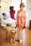 Ritratto del cane di terapia dell'animale domestico che visita paziente femminile in ospedale Fotografia Stock