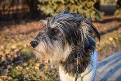 Ritratto del cane ibrido un giorno soleggiato immagine stock libera da diritti