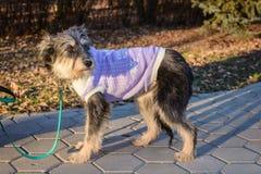 Ritratto del cane ibrido un giorno soleggiato immagini stock libere da diritti