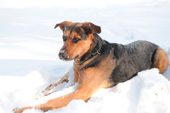Ritratto del cane su bianco Immagini Stock