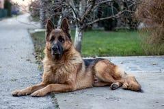 Ritratto del cane sulla via fotografia stock
