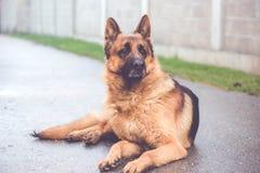 Ritratto del cane sulla via fotografie stock libere da diritti
