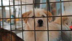 Ritratto del cane triste nel riparo dietro il recinto che aspetta per essere salvato e per adottato alla nuova casa Riparo per il video d archivio
