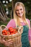 Ritratto del canestro di trasporto dei pomodori del giardiniere felice al giardino Fotografia Stock