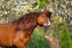 Ritratto del cavallo di Fuuny fotografie stock libere da diritti