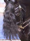 Ritratto del cavallo frisone Immagine Stock Libera da Diritti