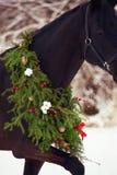 Ritratto del cavallo nero con la corona di natale Fotografie Stock