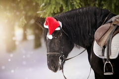 Ritratto del cavallo sellato in un cappuccio in un cappello rosso di Santa Claus Fotografie Stock Libere da Diritti