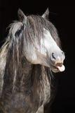 Ritratto del cavallo selvaggio divertente Fotografie Stock Libere da Diritti