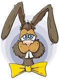 Ritratto del coniglietto di pasqua Immagini Stock