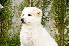 Ritratto del cucciolo Immagine Stock Libera da Diritti