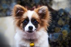 Ritratto del cucciolo di cane Fronte del cane della protezione fotografia stock