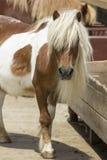 ritratto del foal dell'elemento di disegno Fotografia Stock Libera da Diritti