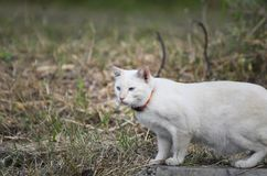 Ritratto del gatto Fotografia Stock