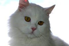 Ritratto del gatto fotografie stock libere da diritti