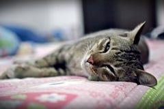 Ritratto del gatto Fotografie Stock