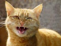 Ritratto del gatto immagine stock libera da diritti