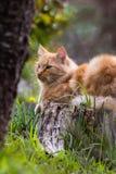 Ritratto del gatto arancio del piccolo vagabondo sveglio che si trova sul tronco di albero all'aperto nel fondo vago Immagine Stock