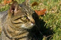 Ritratto del gatto in autunno immagini stock libere da diritti