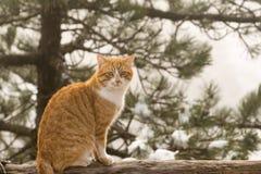Ritratto del gatto contro un bello fondo nevoso immagine stock