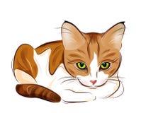 ritratto del gatto di tabby dello zenzero Immagini Stock Libere da Diritti