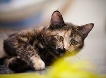 Ritratto del gatto di un di un colore colorato multi fotografia stock