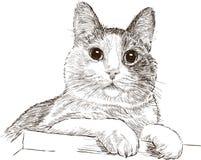 Ritratto del gatto domestico Fotografia Stock Libera da Diritti