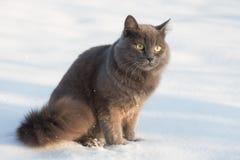 Ritratto del gatto grigio lanuginoso nella neve Fotografie Stock