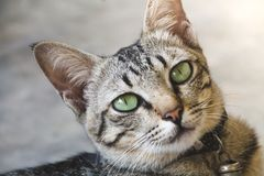 Ritratto del gatto sveglio fotografie stock
