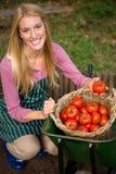Ritratto del giardiniere felice che esamina la merce nel carrello fresca dei pomodori il giardino Fotografia Stock Libera da Diritti